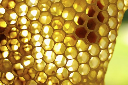 lit collection: A honeycomb (close-up)