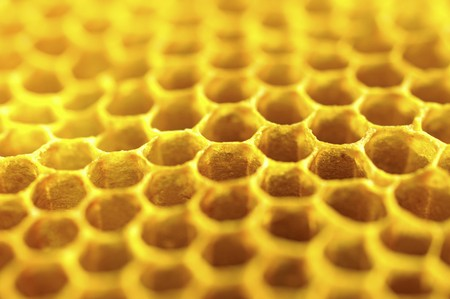 out of production: Honey on a honeycomb (close-up)