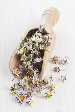 wooden scoop: Dried daisies in a wooden scoop for making daisy tea