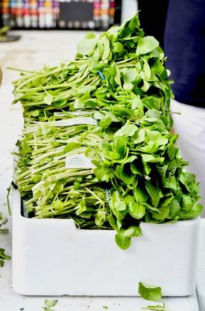 water cress: Fresh, organic watercress in a box