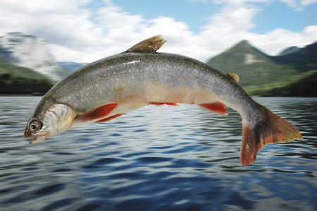 arctic waters: A char jumping out of Lake Grundlsee (montage)