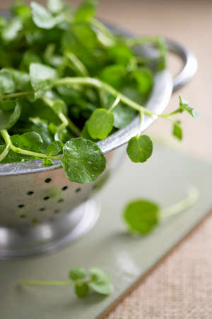 watercress: Fresh watercress in a colander