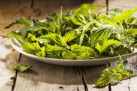 stinging nettle: Fresh stinging nettle leaves