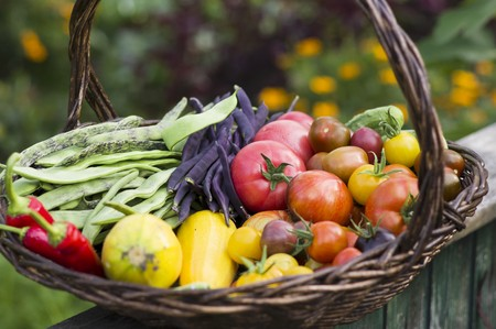 cocozelle: A large harvesting basket in a vegetable garden