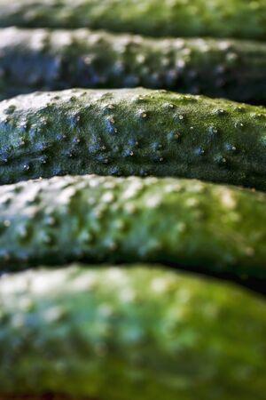 gherkins: A row of gherkins