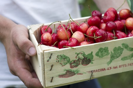 provenance: A man holding a crate of cherries
