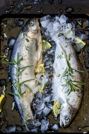 salmo trutta: Two fresh trout with rosemary, lemons and ice