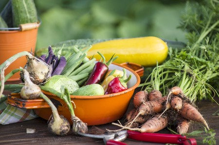 early summer: Early summer vegetable harvest in a garden
