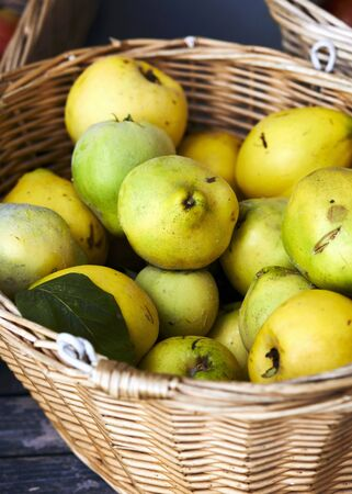 quinces: A basket of fresh quinces