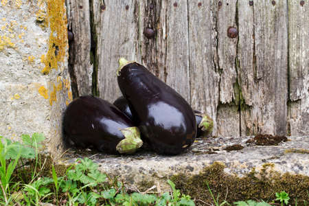 old wooden door: Aubergines in front of an old wooden door
