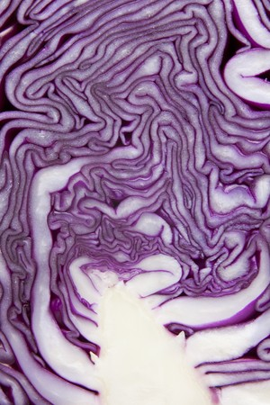 veining: Red cabbage (detail)