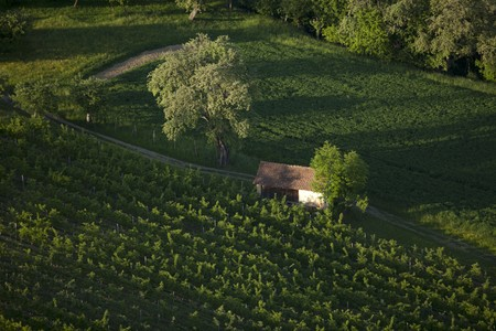 winegrowing: A vineyard and a barn in Austria