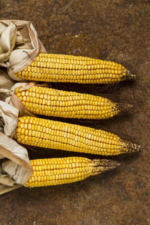 mealie: Four corn cobs on a rusty metal surface LANG_EVOIMAGES