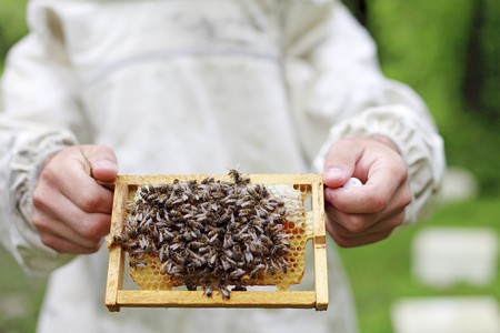 honey comb: A bee keeper holding a honey comb covered in bees