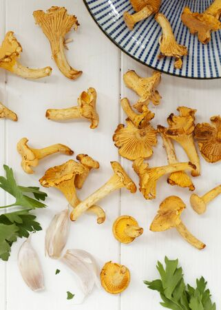 petroselinum sativum: Fresh chanertelle mushrooms with garlic and parsley LANG_EVOIMAGES