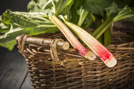 harvested: Two freshly harvested rhubarb sticks in a wicker basket
