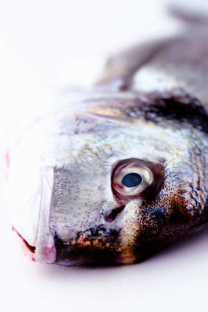 Head of a fresh sea bream (close-up)