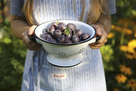 provenance: A woman holding a colander with fresh plums