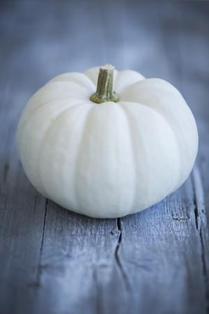 whiteness: White pumpkin Baby Boo pumpkin LANG_EVOIMAGES