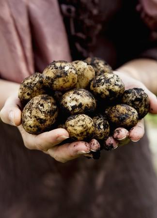 earth handful: New potatos in hands
