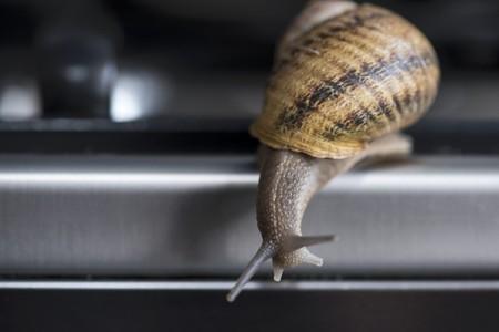 edible snail: A moving edible snail