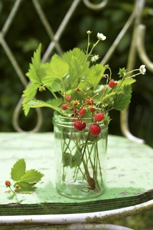 Sprigs of wild strawberries in a glass on a garden bench LANG_EVOIMAGES