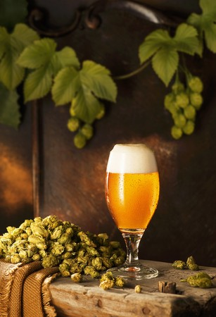 A freshly drawn beer in a glass on a wooden bench with hops and hops vines against a brown wooden wall LANG_EVOIMAGES