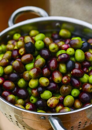 Freshly washed olives in a colander LANG_EVOIMAGES