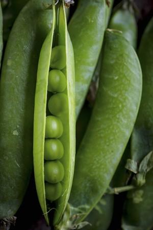 Fresh pea pods (close-up)