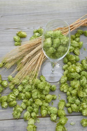 Hop cones and ears of wheat