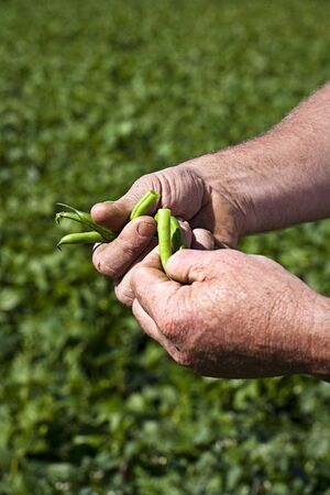 people: A farmer holding freshly harvested green beans LANG_EVOIMAGES