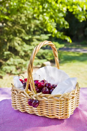 whiteness: A basket of cherries on a red-and-white checked picnic blanket, surrounded by trees