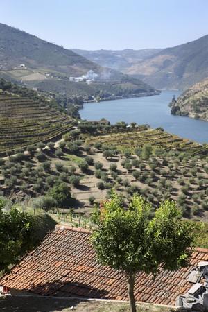 A wine-growing region in Douro (Portugal)