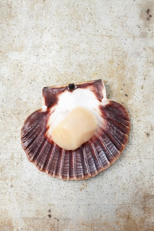 coquille: A fresh scallop in a shell