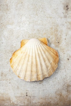 coquille: A scallop in a shell (seen from above)
