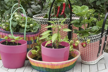 plantlet: Basil seedlings in pink plastic pots, and tomato and strawberry plants in baskets made of woven plastic LANG_EVOIMAGES