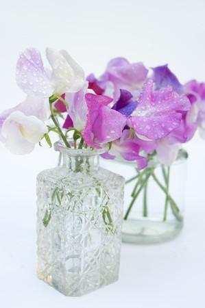 Purple And White Sweet Peas Lathyrus Odoratus In Glass Vases Stock