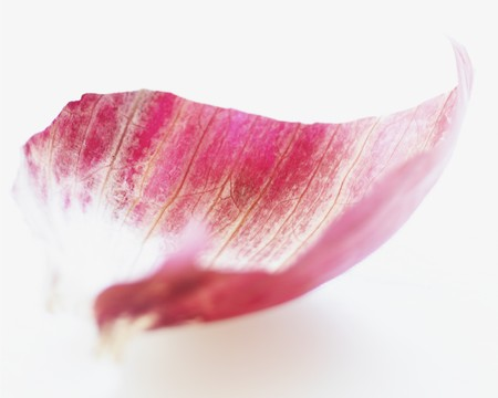 Red onion peel (close-up)