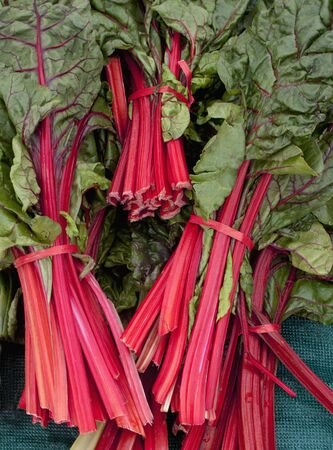 Bunches of red-stemmed chard LANG_EVOIMAGES