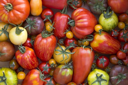 Various Heirloom tomatoes (seen from above) LANG_EVOIMAGES