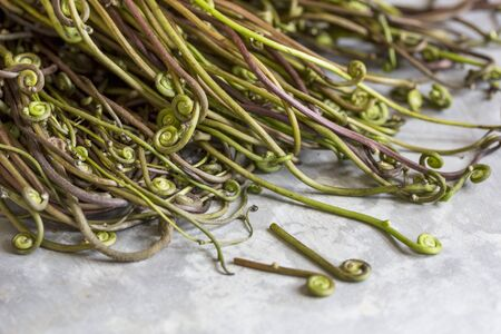 Edible fern tips (Vientiane, Laos)