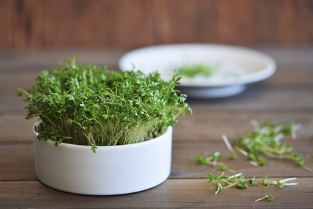 Fresh cress in a pot and on a plate