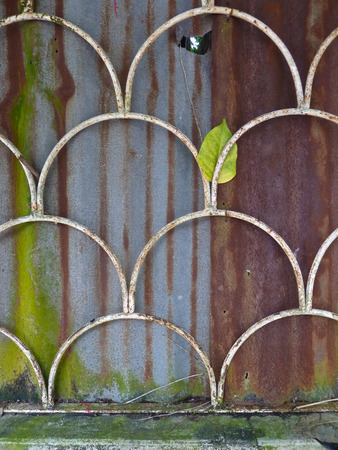 corrugated steel: A white grille with a fish-scale pattern covers a rusty corrugated steel wall which is weathered and adorned with fungus, moss, lichens and mold. A fresh green leaf is visible behind.