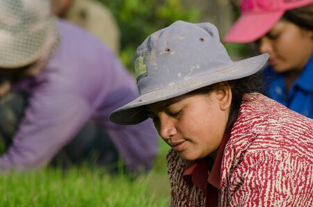 ricefield: A female worker tends to her work intently. Behind her, other workers can be seen indistinctly. Editorial