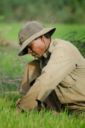 medium shot: Medium shot of male rice worker pulling a bundle of new rice shoots to prepare for replanting. Much of the rice crop today is still planted and harvested by hand, especially in rural areas. Editorial