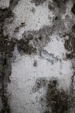 humid: Close up of an old colonial wall in Asia with a variety of textures. This shot features large patches of black mold and mildew obscuring weathered white paint beneath, a result of the humid tropical climate.
