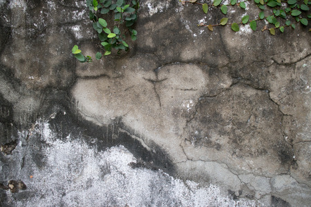 creepers: Old weathered and vintage colonial era wall in Southeast Asia with vines and creepers growing across the top of the frame. Cracks, fissures, and a large streak of black mold appear below. Stock Photo