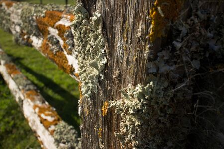 fencepost: Thick colorful lichens on a wooden fence, with vertical fence post in foreground. The lichens are green and orange in the brilliant afternoon sun.
