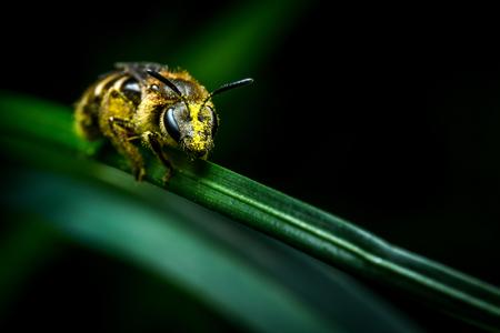 Litlle wasp on grass on dark background macro photo