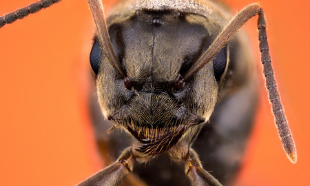 army face: Detail of head of ant on orange background macro or micro photography Stock Photo